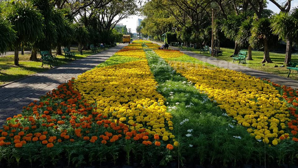 The-Top-5-AmeriSeed-Flowers-to-sow-this-Spring-for-Beautiful-Summer-Long-Blooms.2-1-1