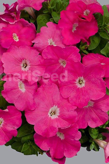 pink-32