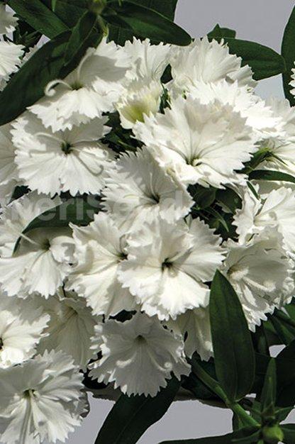 white-10