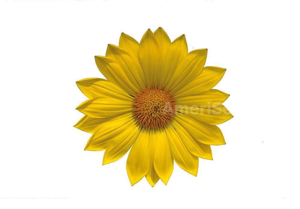 yellow-17